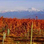 Escapadas a Mendoza viña de otoño