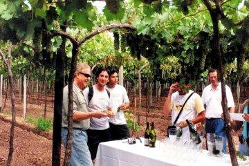 Caminos del vino