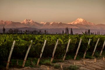 Atardecer en viñedos - Vino en Mendoza