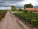 Bodegas francesas - Fabre Montmayou