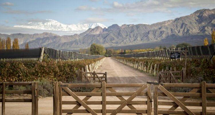Mendoza, tierra de viñedos y del buen vino