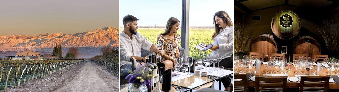 Experiencias enoturísticas para amantes del vino