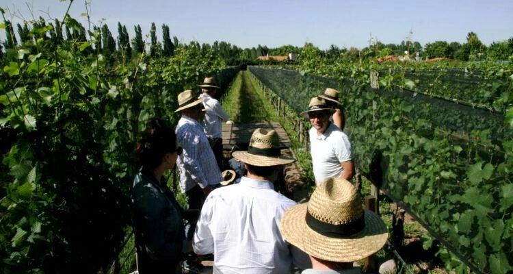 El diario francés Le Monde destacó a Mendoza y a sus vinos
